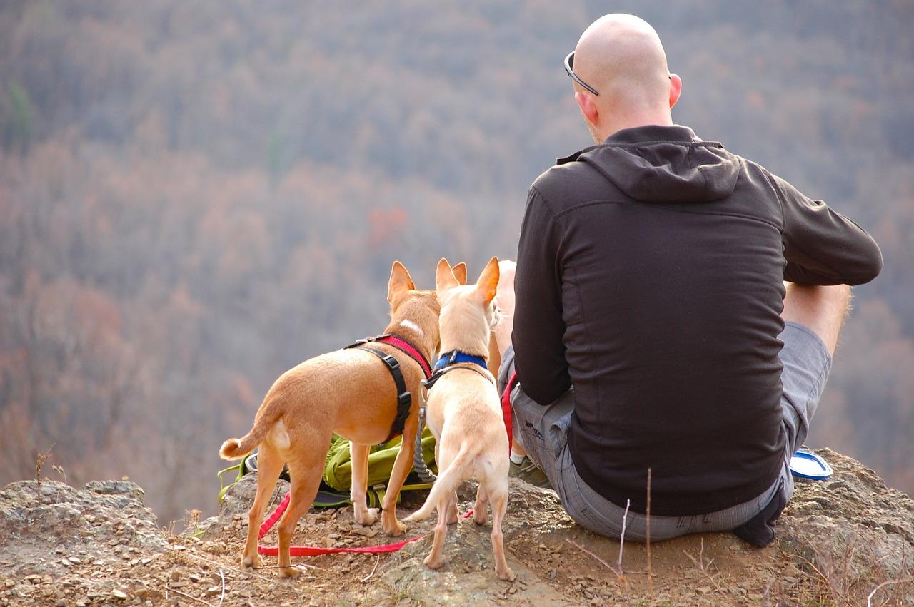 Tourisme avec des animaux de compagnie